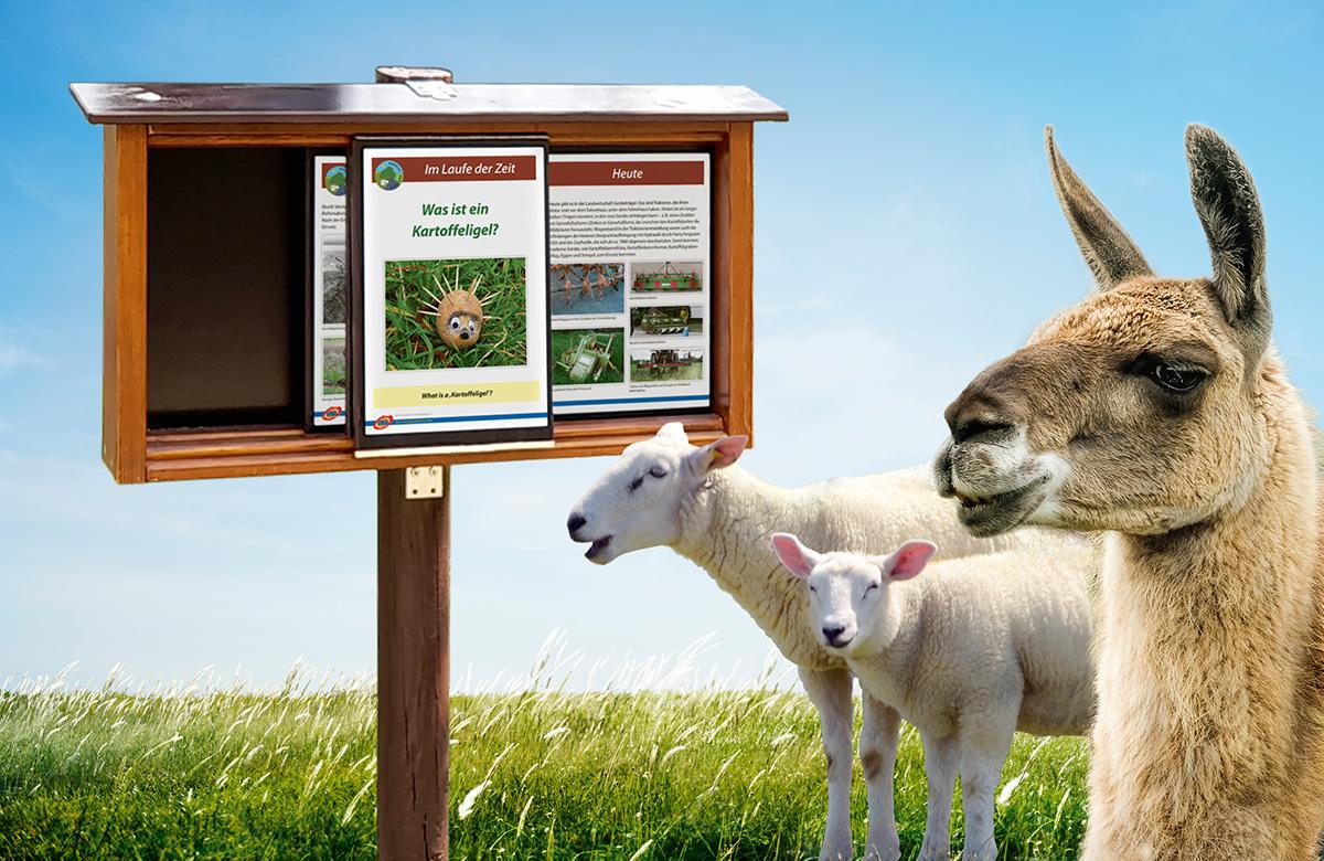 Beschilderung Tierpark Hebelei, Kasten mit Schild, darunter Lama, 2 Schafe
